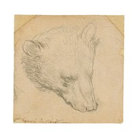 Leonardo Da Vinci's 'Head of a Bear' to be Offered at Christie's London in July