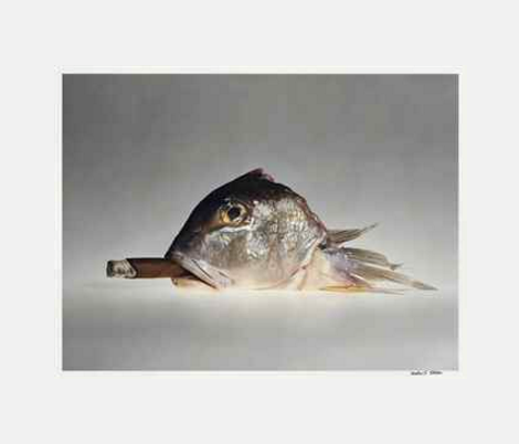 Cohiba Cigar with Smoking Fish by Elliott Erwitt