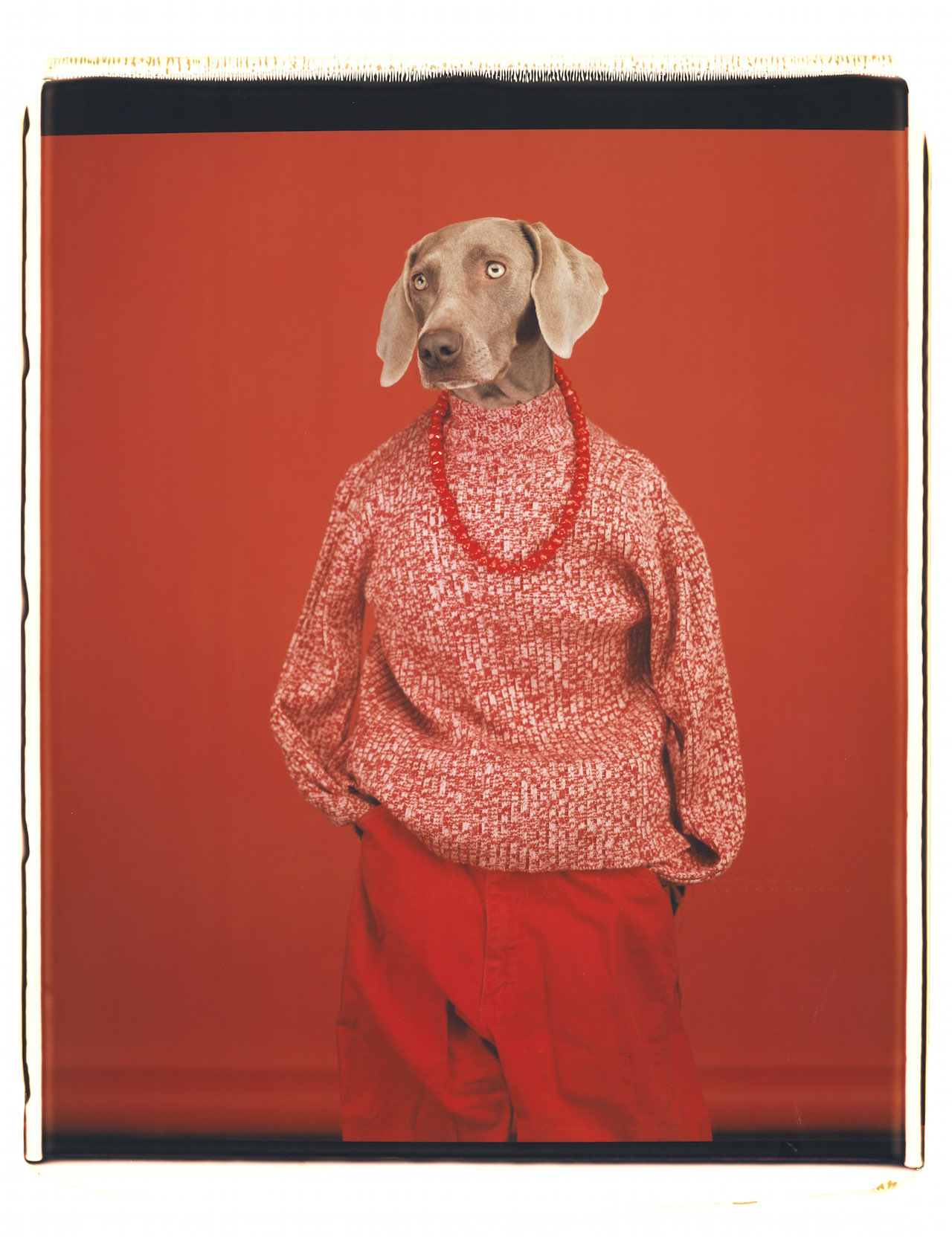 William Wegman, Casual, 2002. Courtesy of the artist. From the exhibition Being Human